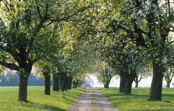 Картинка дорога, деревья, природа, пути, путь, дерево, дороги, весна, аллея, аллеи