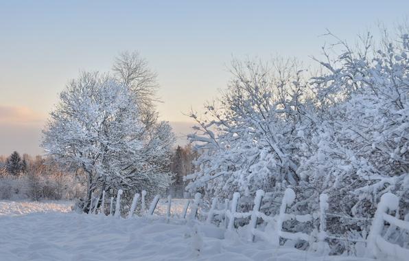 Картинка зима, снег, деревья, забор, утро, мороз