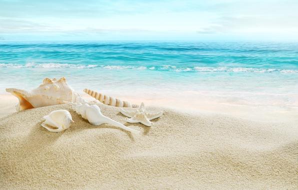 Обои песок, море, пляж, берег, ракушки, summer, beach, sea, blue, sand, shore, paradise, starfish, seashells