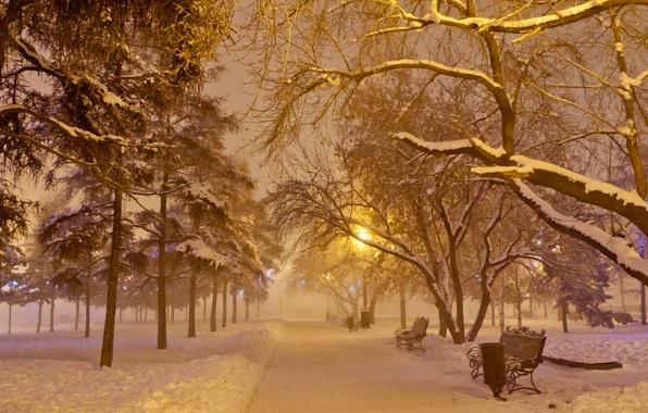 Картинка иней, снег, ночь, туман, лавочка, фонарь, Новый год, гирлянда, аллея, сквер