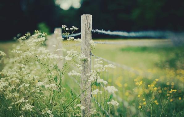 Фото обои цветы, flowers, широкоэкранные, HD wallpapers, обои, ограда, полноэкранные, ограждение, background, fullscreen, желтый, макро, широкоформатные, цветочки, ...