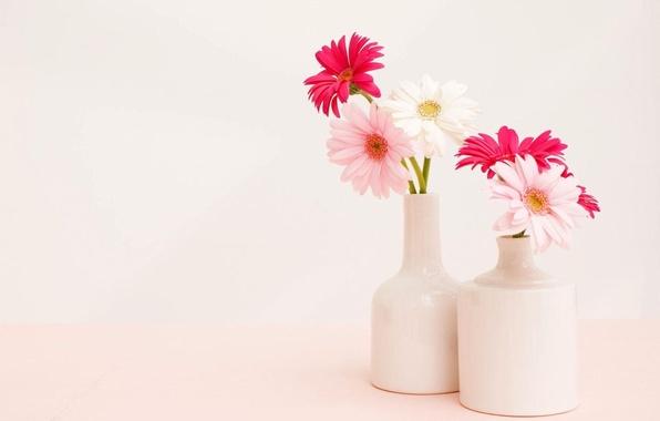 Картинка фон, букет, светлый, ваза, Герберы
