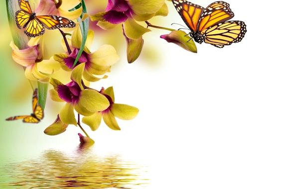 Картинка бабочки, цветы, yellow, орхидея, water, flowers, beautiful, orchid, spring, reflection, butterflies