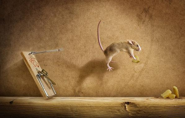 Картинка сыр, мышеловка, полёт, мишь