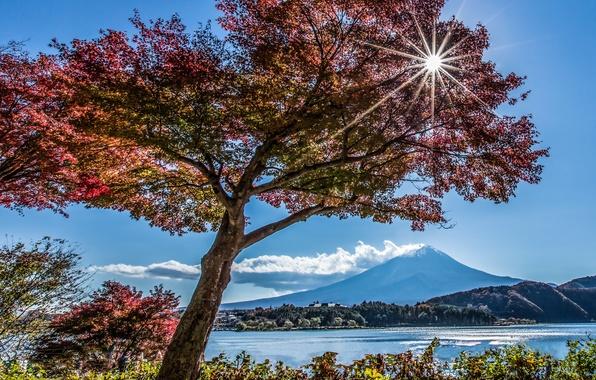 Картинка осень, озеро, дерево, гора, Япония, Фудзияма