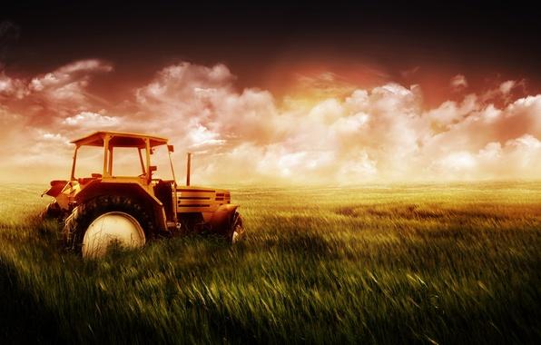 Картинка пшеница, поле, небо, трава, трактор
