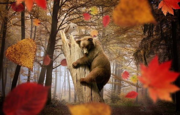Картинка осень, лес, листья, деревья, сова, грибы, медведь, листопад