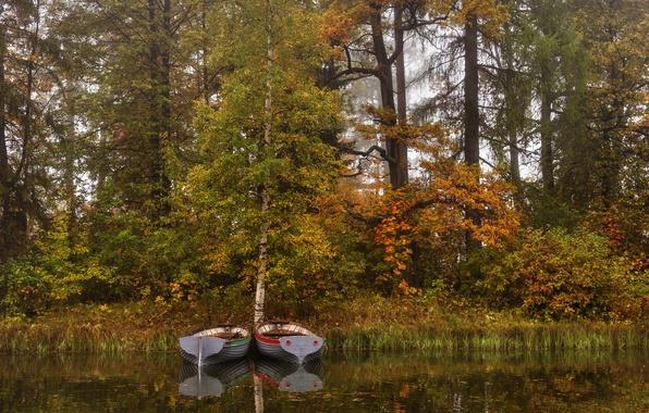 Картинка осень, деревья, туман, пруд, парк, камыши, лодки, Санкт-Петербург, Россия, Gatchina