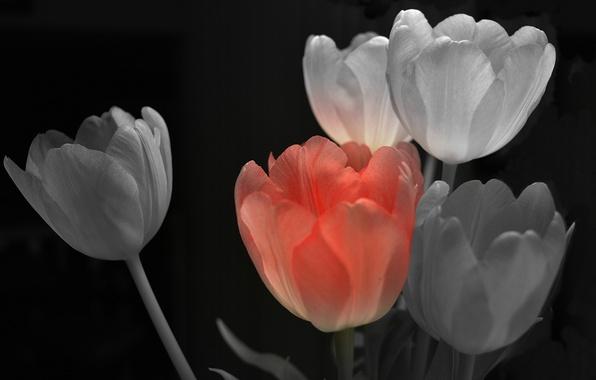 Картинка фон, краски, лепестки, тюльпаны