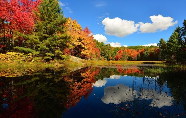 Картинка осень, лес, небо, облака, деревья, пруд