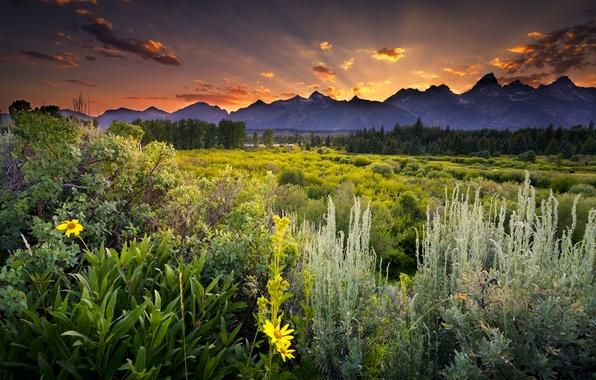Картинка зелень, поле, лес, облака, деревья, закат, цветы, горы, вечер, Вайоминг, сосны, USA, США, Wyoming, национальный …