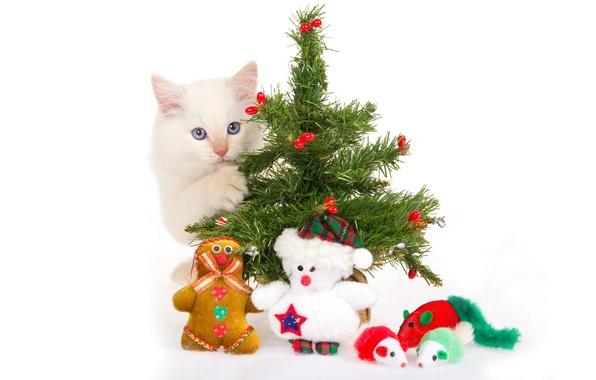 Картинка котенок, игрушки, елка, белый фон, сувениры