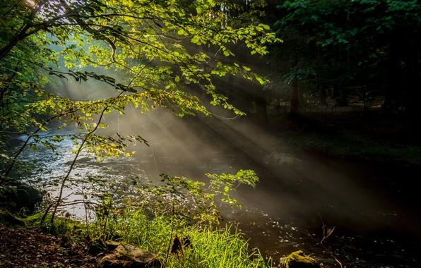 Картинка лес, лучи, деревья, природа, туман, река