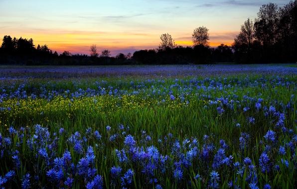 Картинка поле, цветы, природа, роса, утро
