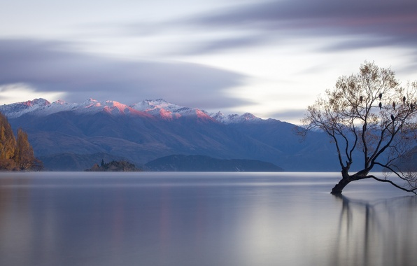 Картинка горы, озеро, дерево, Новая Зеландия, панорама, New Zealand, водная гладь, Lake Wanaka, озеро Уанака, Lone …