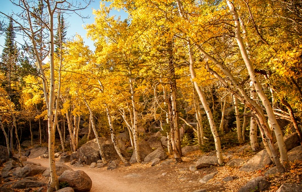 Картинка осень, лес, небо, деревья, камни, склон, тропинка