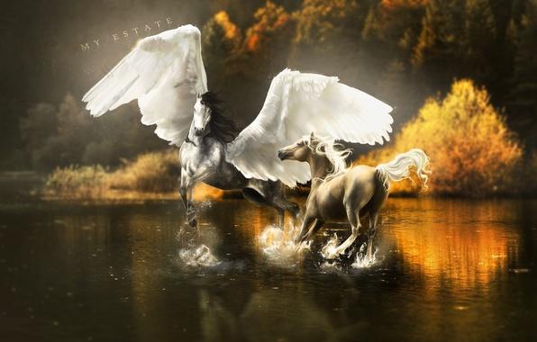 Картинка вода, деревья, брызги, отражение, фантастика, крылья, лошади, арт, пегас