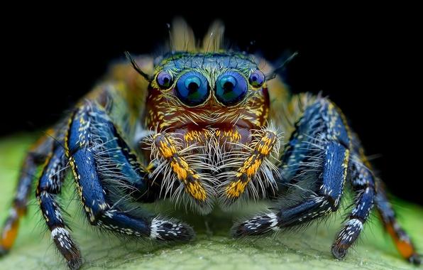 Картинка глаза, паук, мохнатый, смотрят, джампер