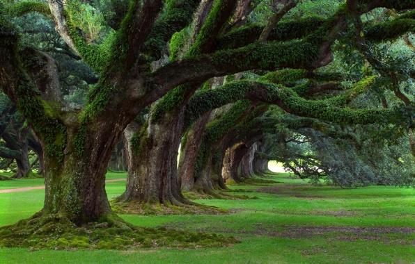Картинка зелень, лес, лето, трава, деревья, природа, парк, весна, grass, park, trees nature walls