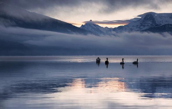 Картинка зима, снег, пейзаж, горы, природа, озеро, отражение, рассвет, лебеди