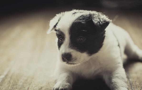 Картинка друг, собака, мордочка, щенок