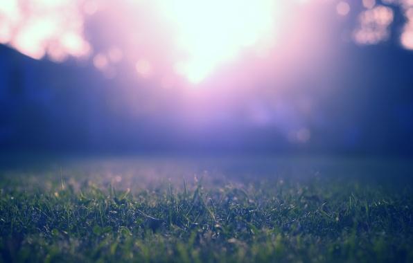 Картинка фиолетовый, трава, макро, лучи, свет, деревья, синий, природа, зеленый, блики, газон, цвет, лужайка