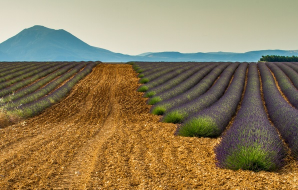 Картинка поле, горы, природа, Франция, лаванда