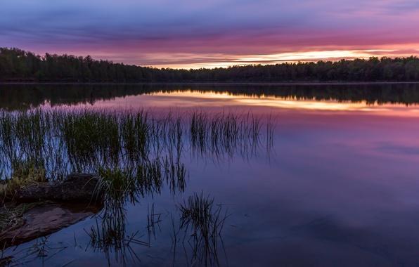 Картинка лес, небо, трава, деревья, закат, отражение, река, берег, вечер, США, Пенсильвания, Национальный Парк