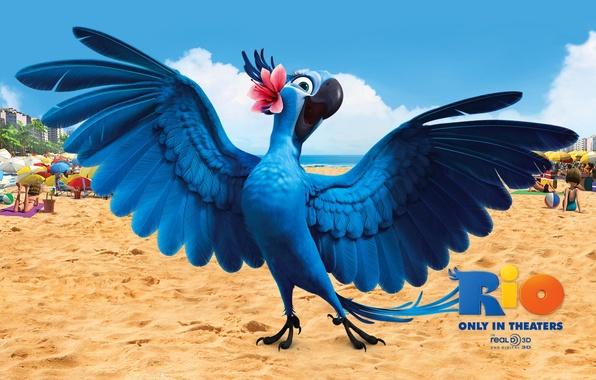 Картинка птицы, мультфильмы, рио, angry birds, rio