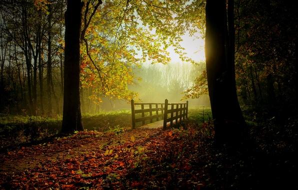 Картинка зелень, осень, лес, листья, солнце, деревья, мост, туман, поток, дорожка
