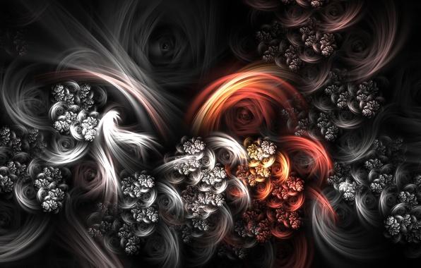 Картинка белый, цветы, красный, черный, bouquet, sama 37, xero