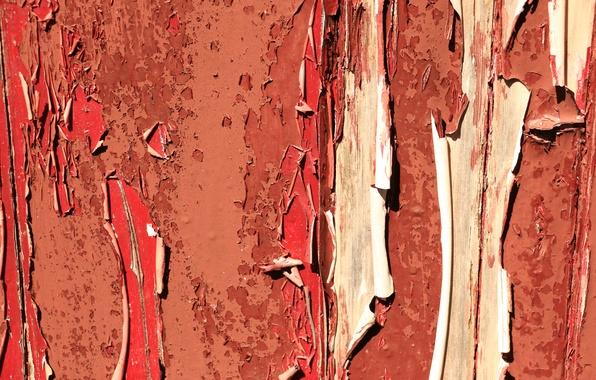 Картинка фон, стена, краска