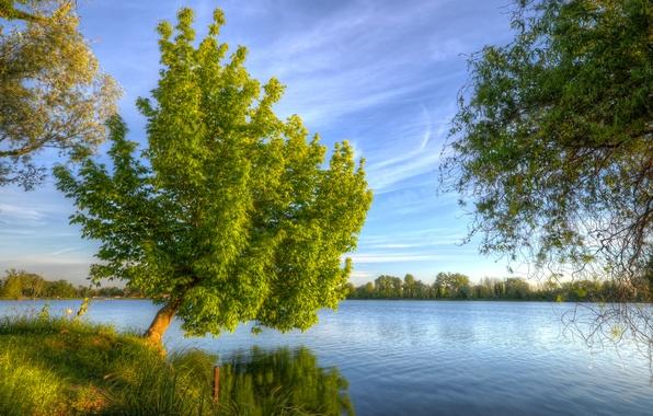 Картинка небо, трава, облака, пейзаж, река, дерево