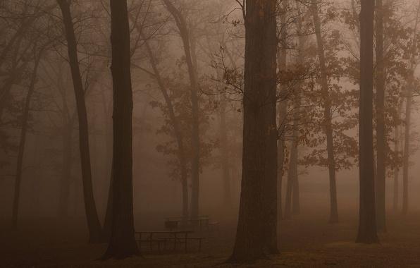Картинка лес, свобода, деревья, свежесть, туман, темнота, отдых, красота, утро, дымка, скамейки