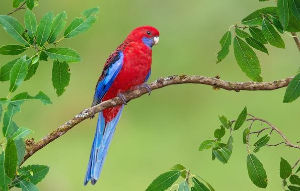 Картинка яркий, птица, ветка, попугай