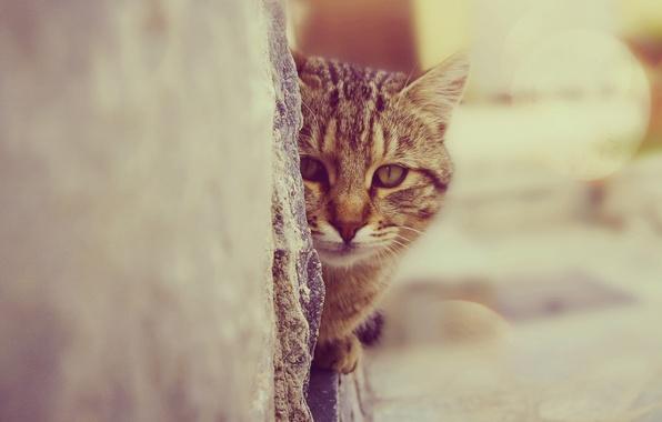 Картинка взгляд, стена, Кошка, зрачки, котя