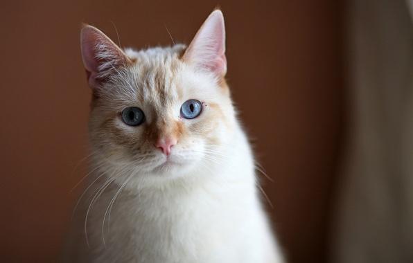 Картинка кот, кошак, грустный взгляд