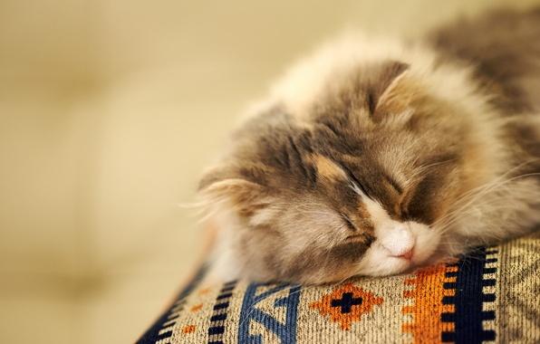 Картинка кошка, фон, сон, мордочка, спит, пушистая