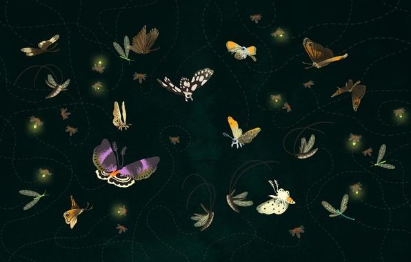 Картинка полет, бабочки, траектория, мотыльки