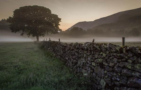 Картинка туман, дерево, рассвет, утро, ограда