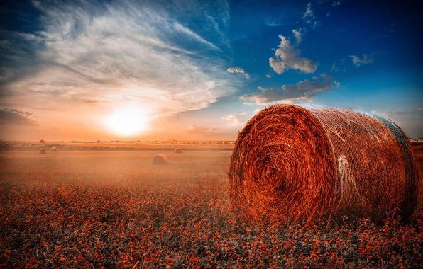 Поле сено рулоны обои фото картинки