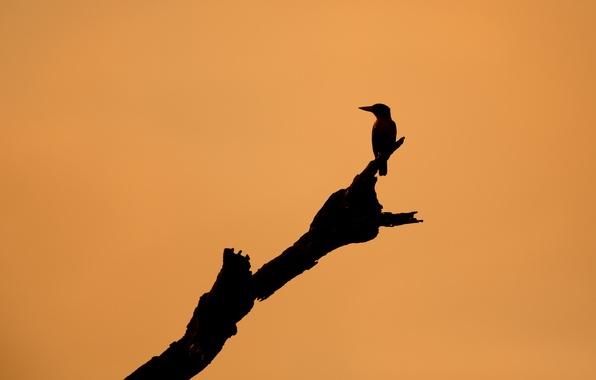 Картинка фон, дерево, птица
