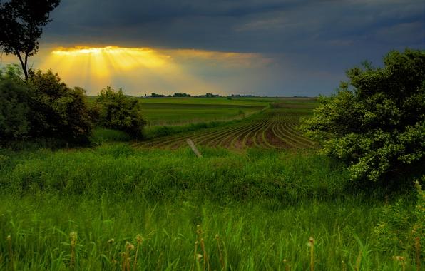 Картинка поле, небо, закат, весна