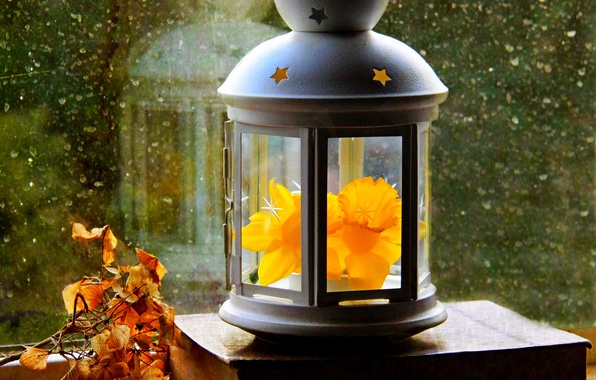 Картинка осень, цветок, листья, капли, весна, окно, фонарь, flower, autumn, leaves, window, нарцисс, drops, spring, paper, …