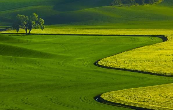 Картинка трава, пейзаж, природа, дерево, поля
