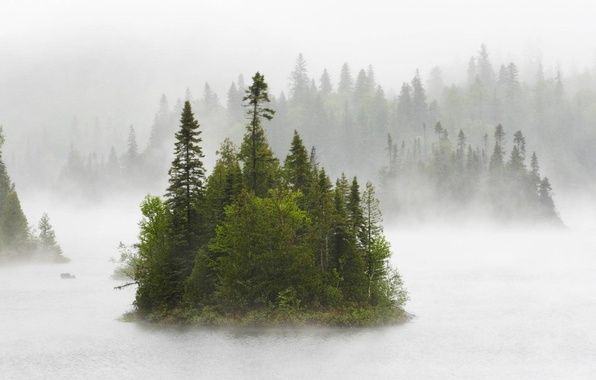 Картинка лес, природа, туман, река, Canada, fog on fentol lake