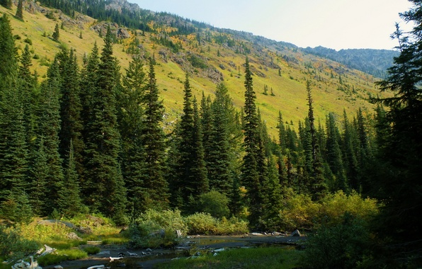 Картинка лес, природа, фото, ель, США, Washington, Mt. Baker-Snoqualmie National