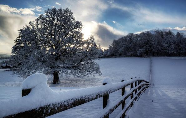 Картинка зима, небо, облака, снег, деревья, природа, дерево, забор