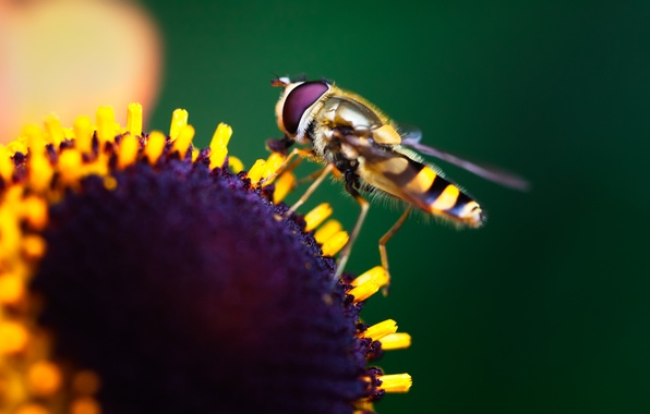 Картинка цветок, макро, краски, colors, насекомое, flower, macro, боке, bokeh, 2560x1600, insect