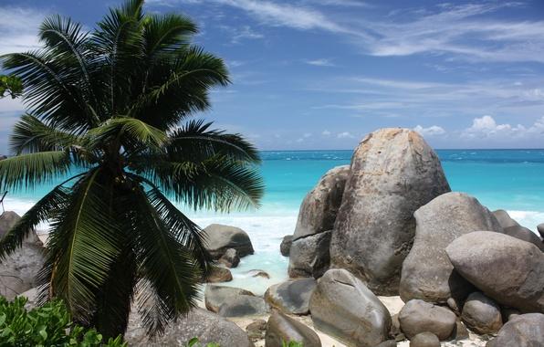 Картинка песок, море, пляж, камни, пальмы, побережье, beach, coast, bushes, sand, кустарники, stones, palm trees, the …